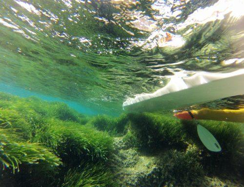 Posidonia Sea Grass